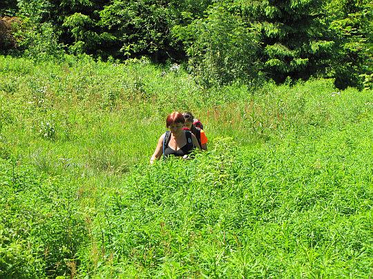 Przeciskając się przez wysokie trawy.
