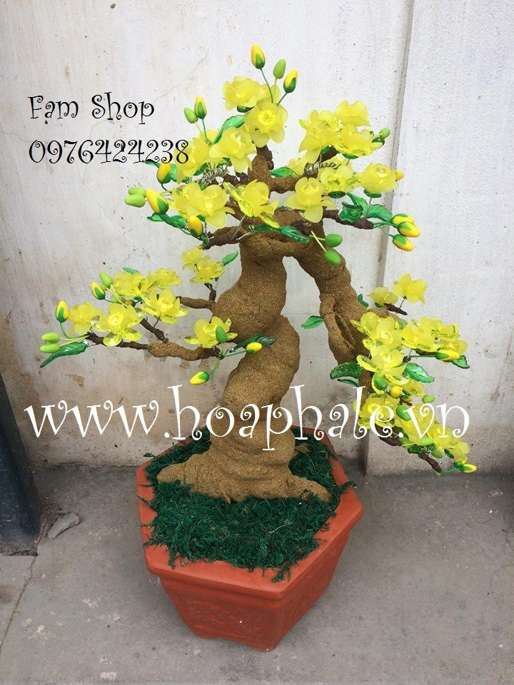 Goc bonsai mai dao the thac do tai An Trach
