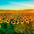 5 Taman bunga terindah di Eropa