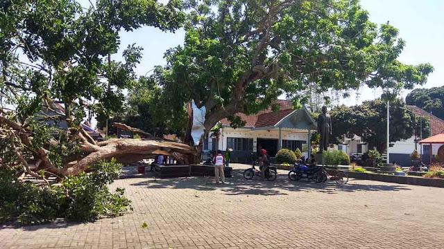 Pohon Gada di Rumah Bung Karno Terbelah dan Tumbang, Pertanda Ganti Presiden?