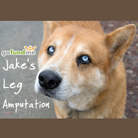 Raising Funds for Jake's Leg Amputation Due to Cancer