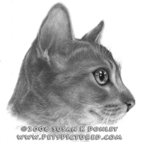 01-Abysinnian-Cat-Susan-Donley-Cats-and-Dogs-Featured-in-Pencil-Portraits-www-designstack-co