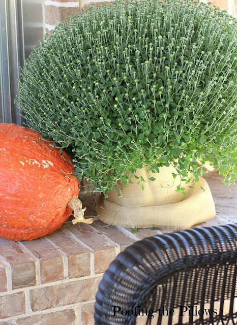 fall mums and pumpkins