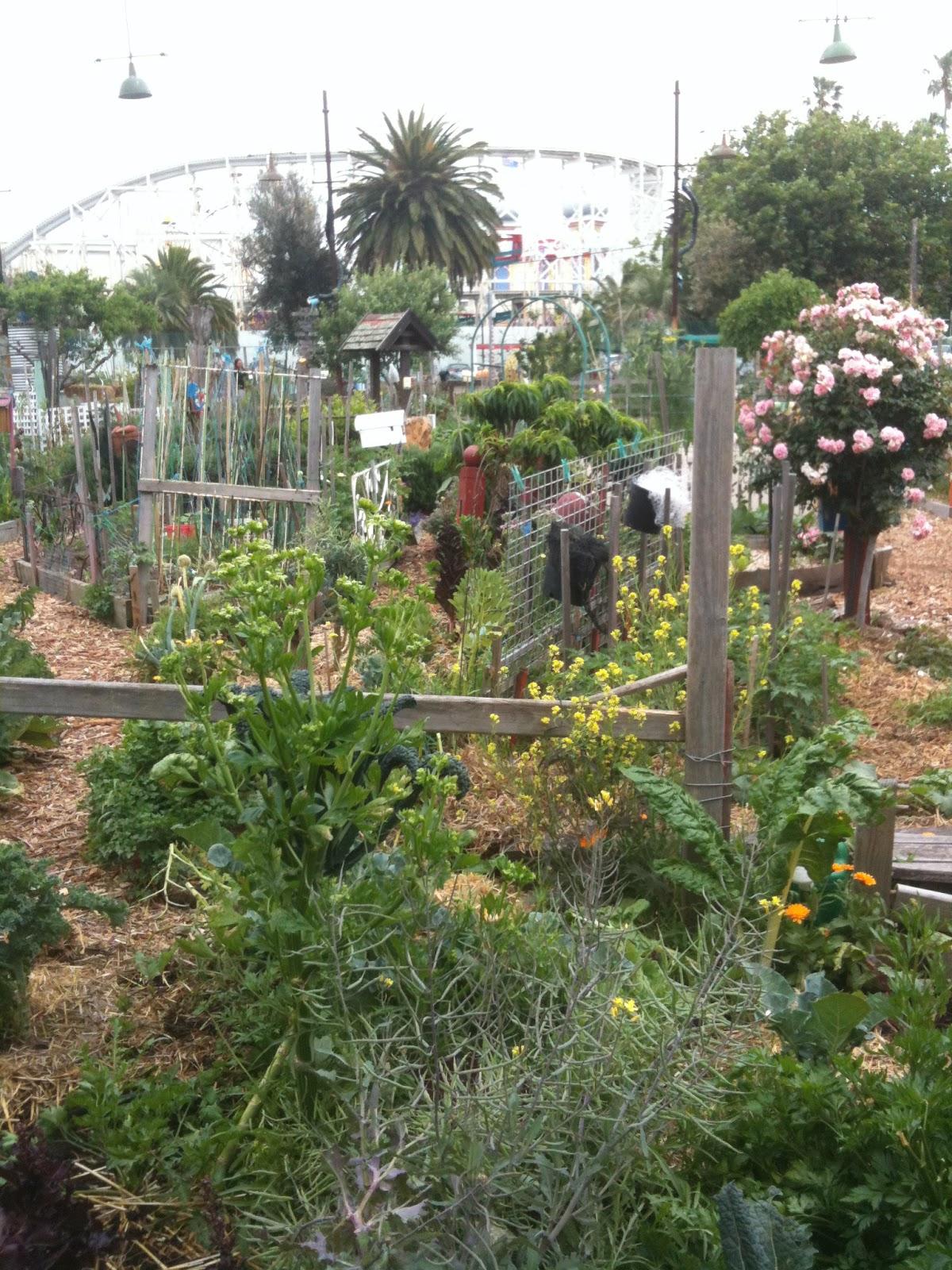city garden country garden: Creative Inspiration