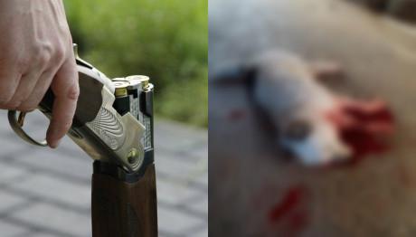 Σέρρες: Κυνηγός εκτέλεσε εξ επαφής αδέσποτο με καραμπίνα