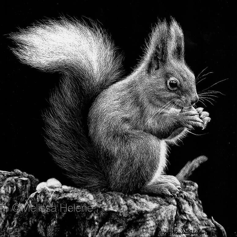 03-Squirrel-Melissa-Helene-Amazing-Expressions-in-Scratchboard-Animal-Portraits-www-designstack-co