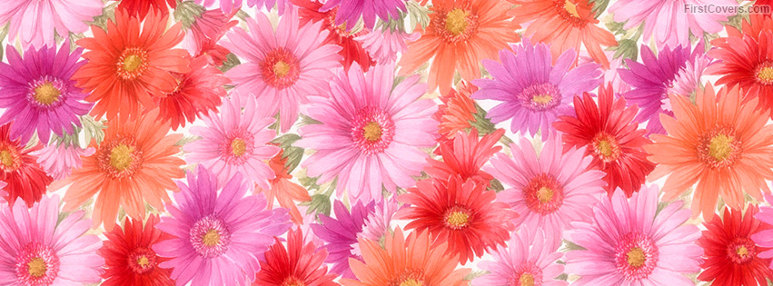 Floral Facebook Covers: Web Design Company In Udaipur: Flowers Facebook Timeline