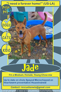 Adopt Jade flyer from Pose-a-Pet