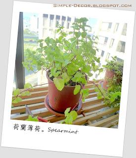 http://simple-decor.blogspot.tw/2015/11/greeny-garden-spearmint.html