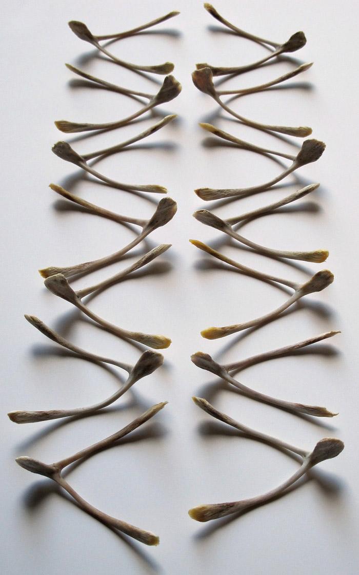 Jamie Newton photo of wishbones