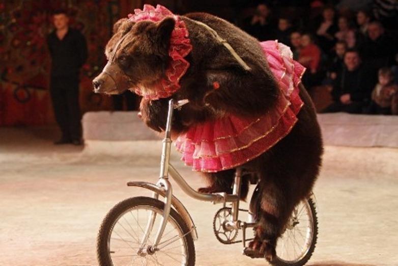 Urso a andar de bicicleta no circo