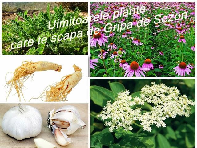 plantele medicinale pot preveni si vindeca usor raceala si gripa