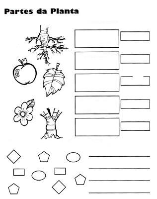 Dibujo De Actividad Sobre Plantas Para Colorear Y Completar