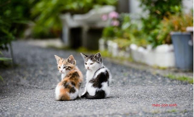 2 chú mèo con tâm sự