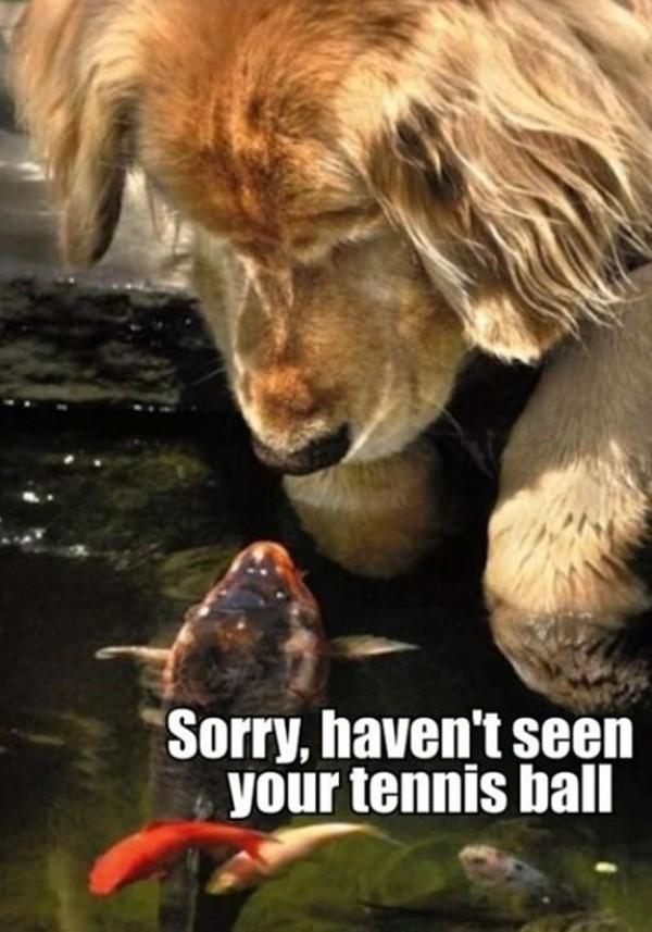 30 funny animal captions (30 pics) | Amazing Creatures
