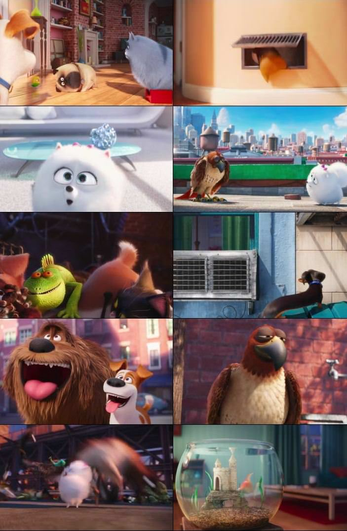 The Secret Life Of Pets 2016 Dual Audio ORG Hindi 300MB BluRay 480p