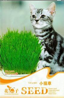 benih-cat-grass.jpg