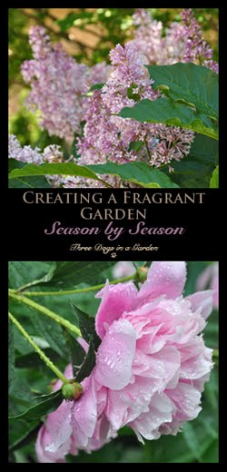 Creating a Fragrant Garden Season by Season
