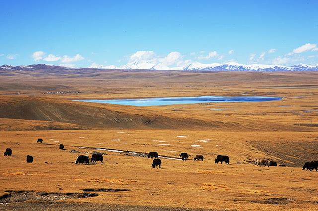 青藏鐵路沿途風光-可可西里無人區