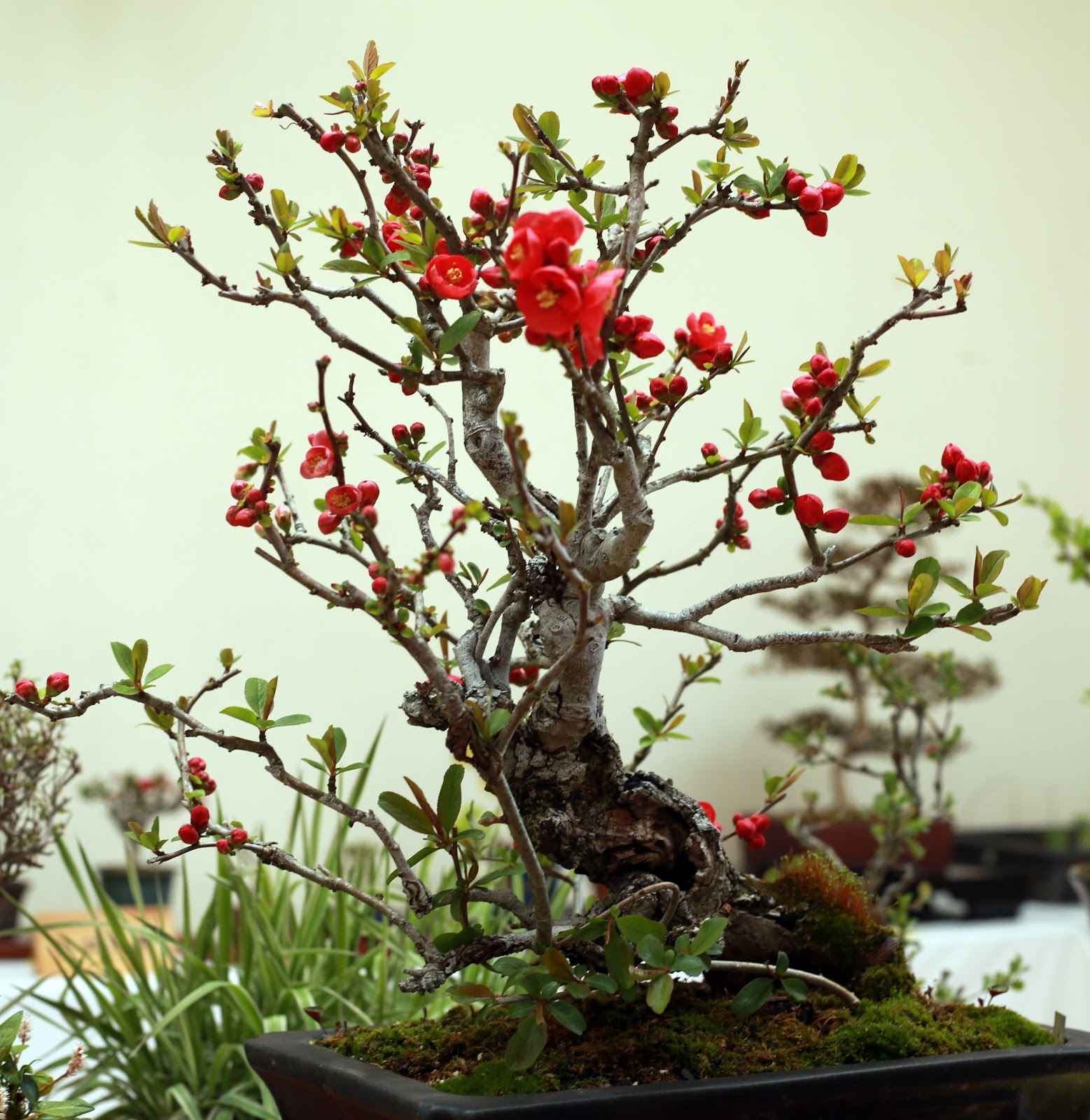 Wild Bird And Flower Around Tokyo Abiko Citizen39s Bonsai Exhibition