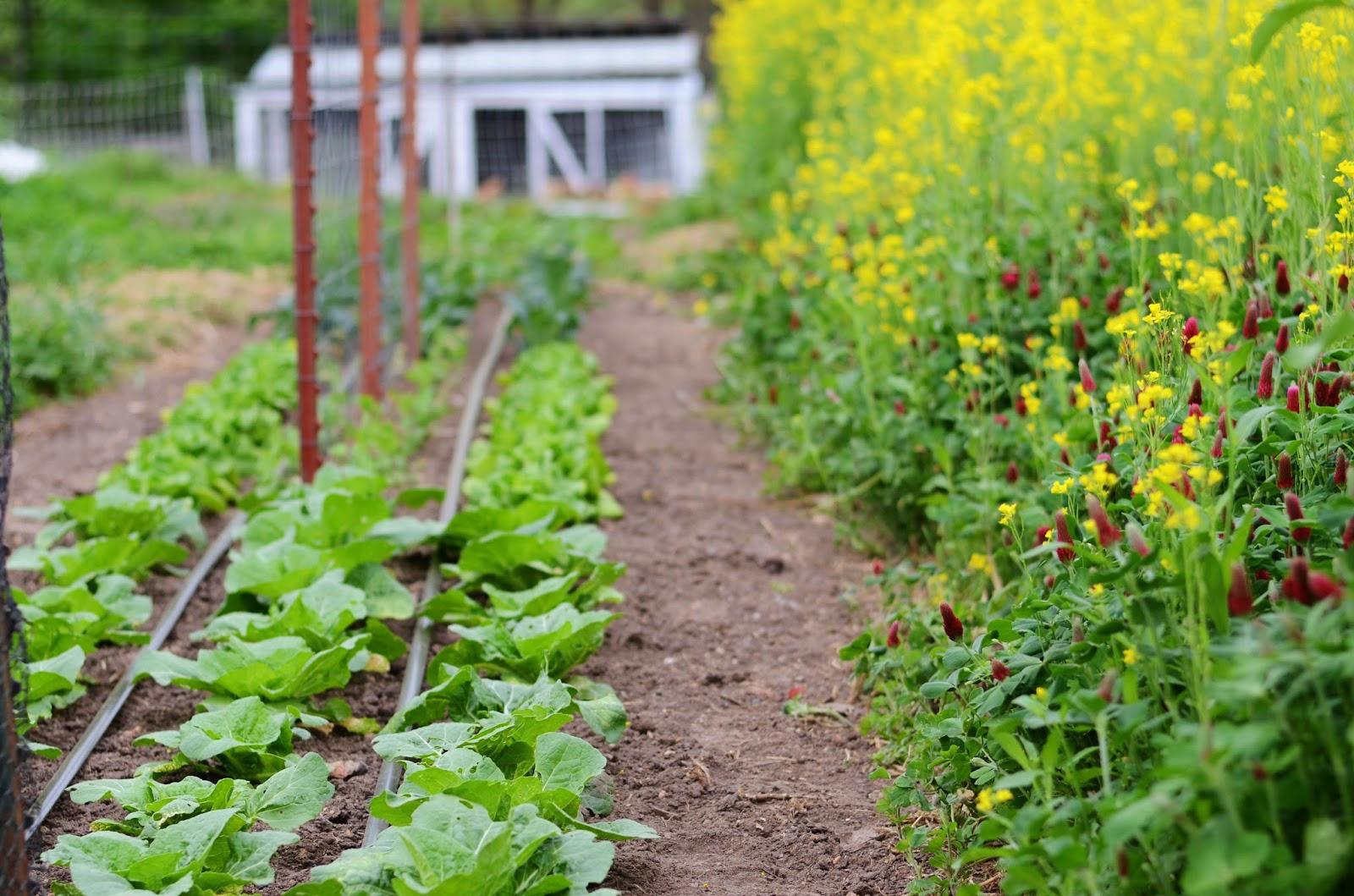 natalie creates in the garden april 2016