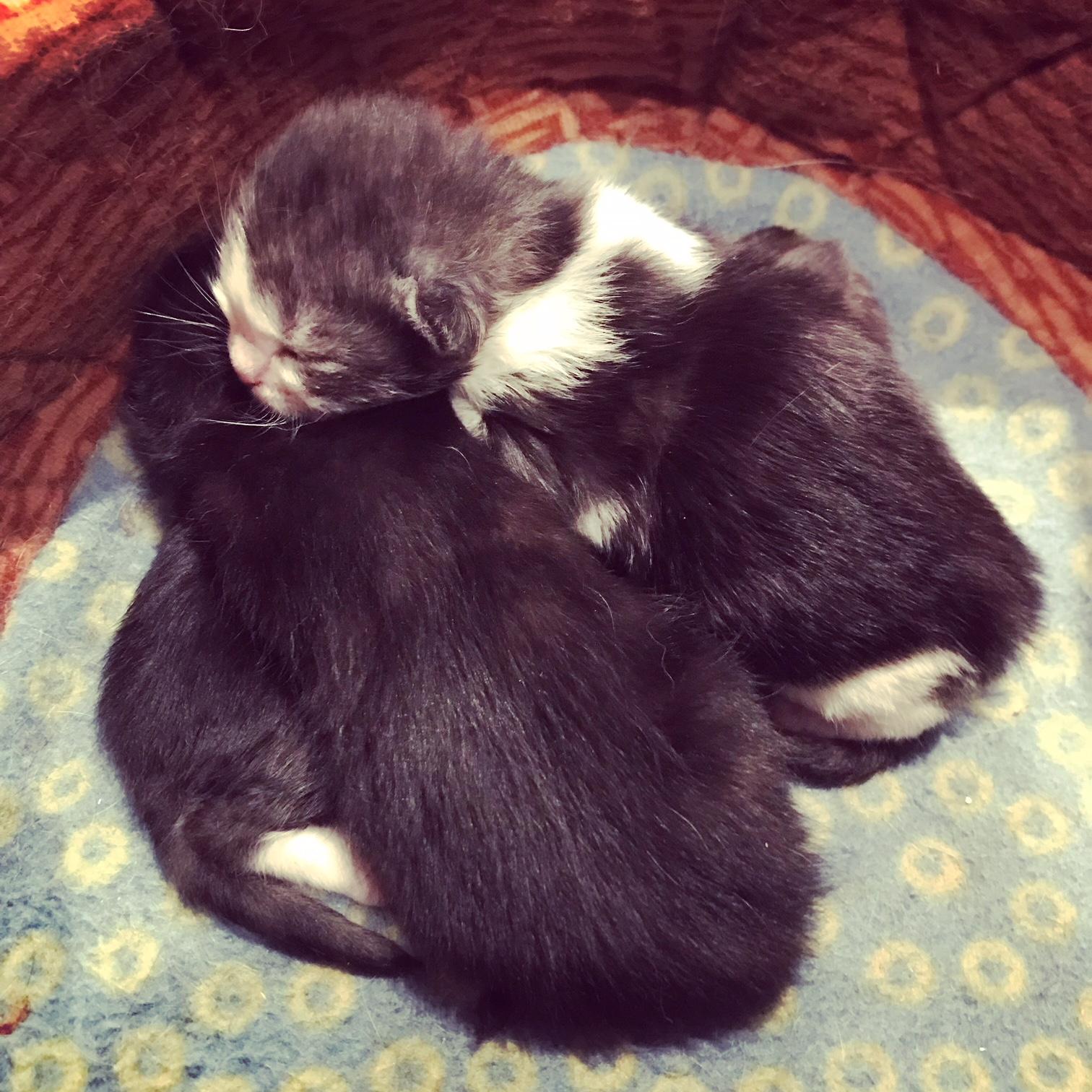 naissance de petit chat