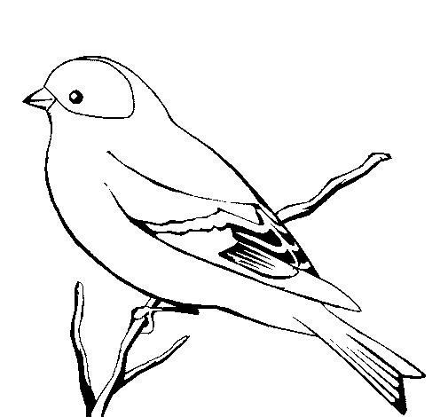 Colorir e Pintar: Aves para colorir