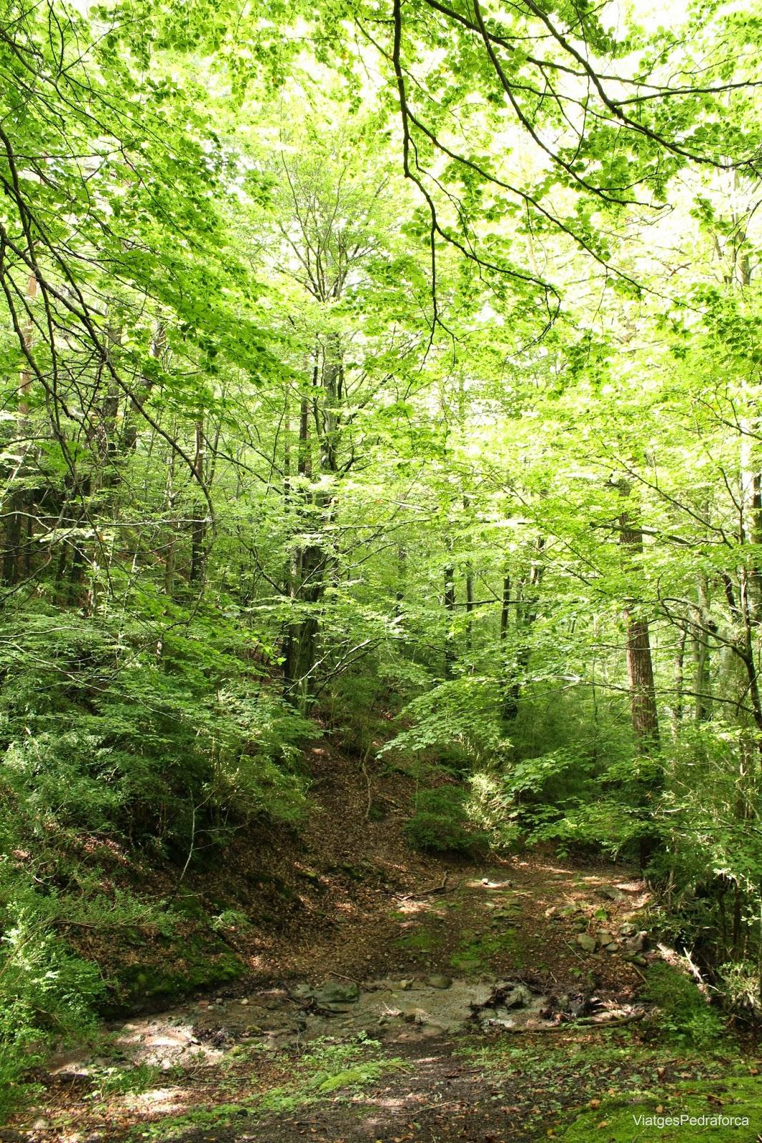 Fageda de Millares Parc natural del Cadí-Moixeró Alt Berguedà Bagà