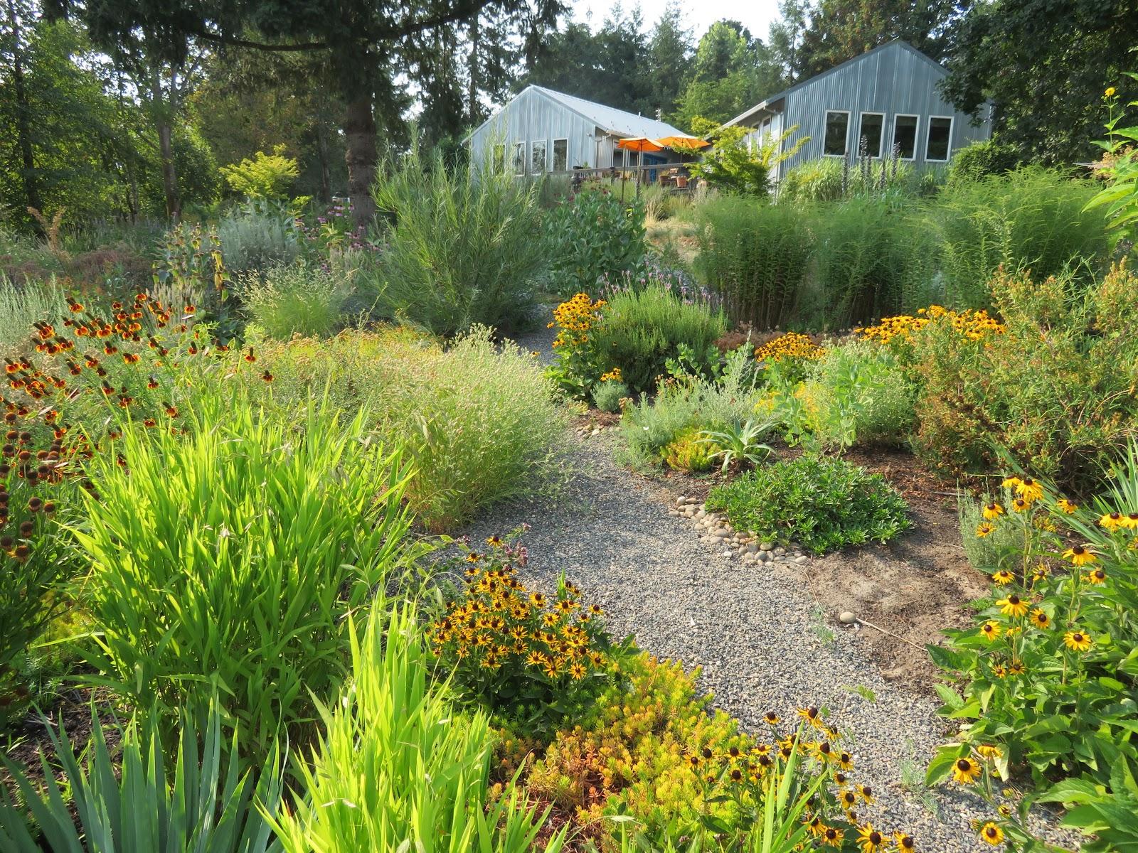 Late August Garden on
