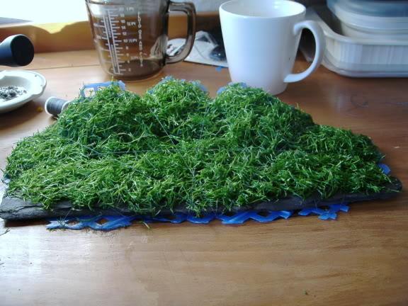 Hướng dẫn trải nền bằng rêu Ricca thủy sinh - lấy cước buộc rêu Ricca vào giá thể