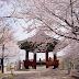 6 tempat menarik mesti lawat jika bercuti ke Korea ketika musim bunga