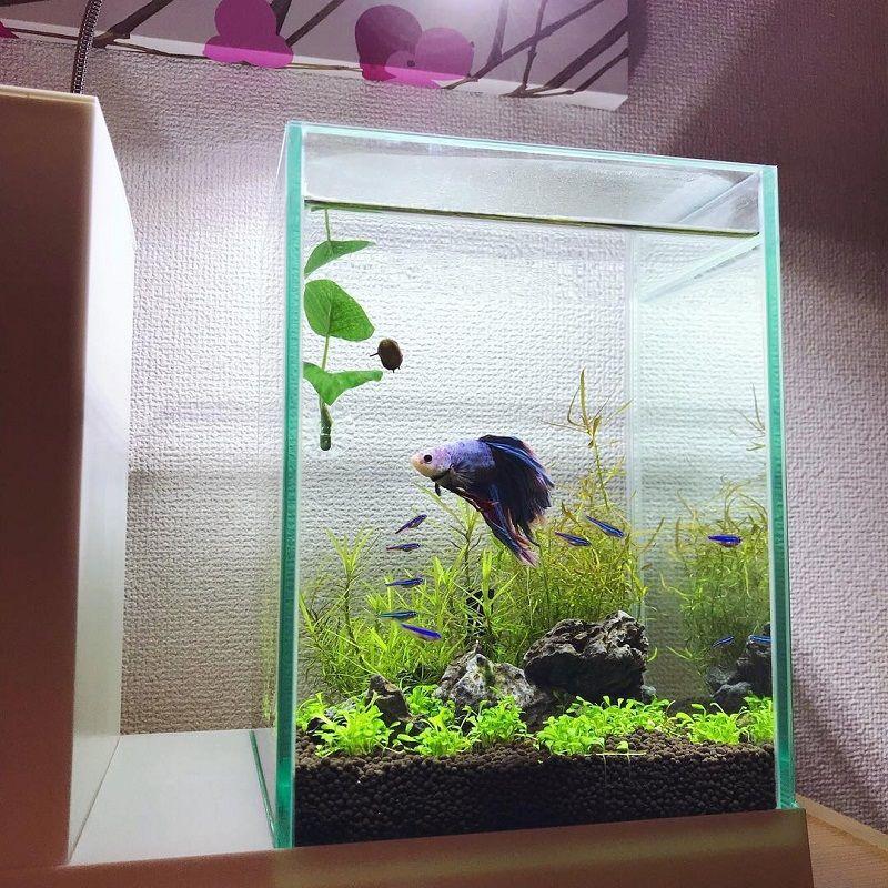 Image Betta Fish Tank Heater