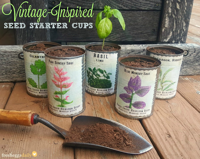 I Look Forward To Spring And Starting Seeds Indoors In Preparation For  Transplanting Them Outside In The Garden. I Especially Like To Start Herb  Seeds, ...