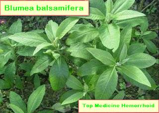 Top Medicine Hemorrhoid