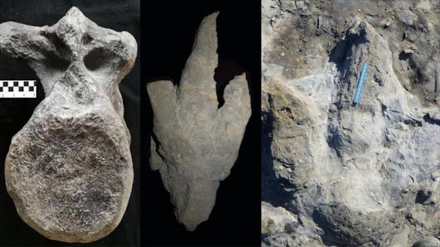 Hallan en España restos del mayor dinosaurio carnívoro de Europa