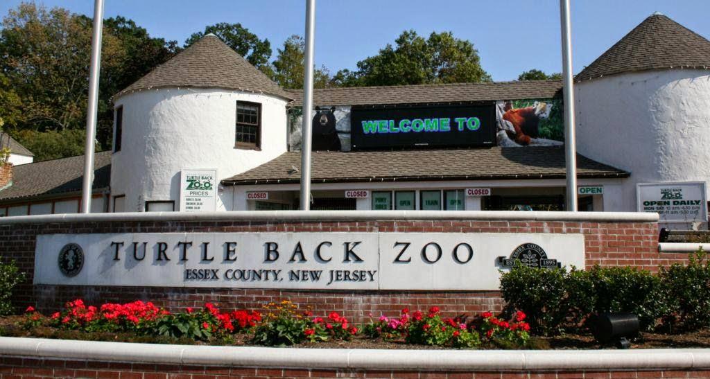 Turtle Back Zoo Christmas Lights 2019.A Walk On The Wild Side Turtle Back Zoo The History Girl