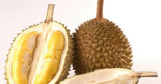 Contoh Judul Penelitian Biologi Contoh Skripsi Contoh Penelitian Biologi Kajian Biologi Reproduksi Tanaman Durian