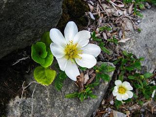 岩の隙間に咲く白い花