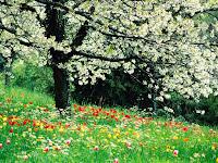 Fonds d'écrans de printemps gratuit