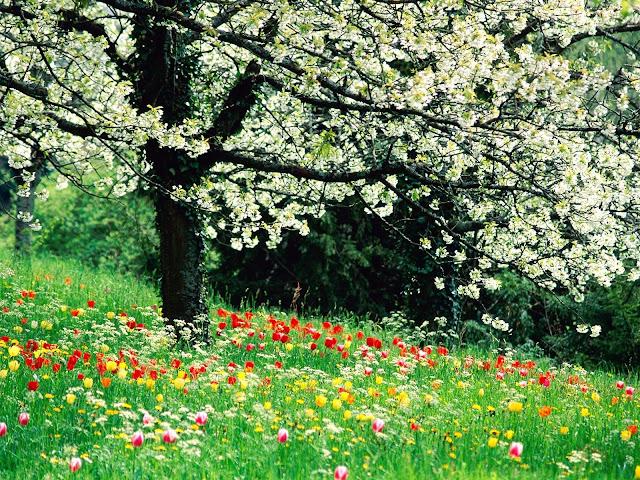 Fond d'écrans printemps fleurs