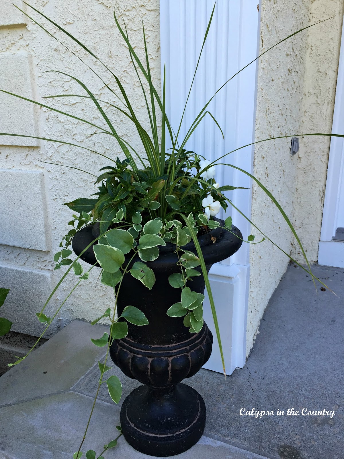 Potted plants in black urn for front porch