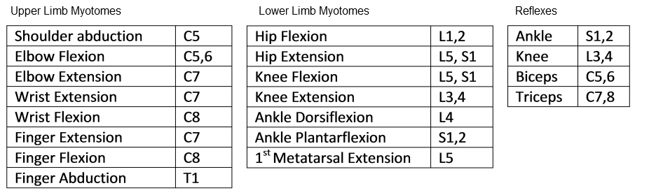 Myotomes Lower Limb | www.pixshark.com - Images Galleries ...