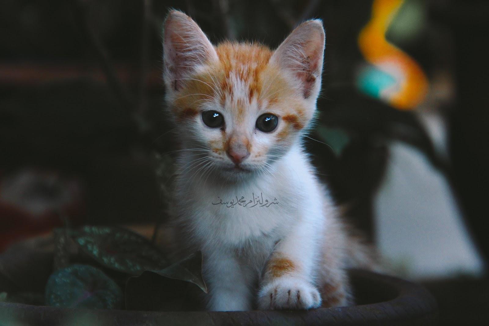 Anak Kucing Yang Comel Dan Riang - 5