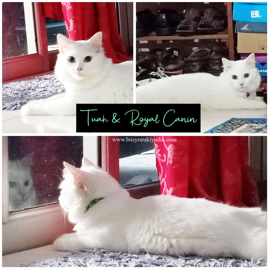 royal canin, royal canin hair & skin, makanan kucing premium terbaik,