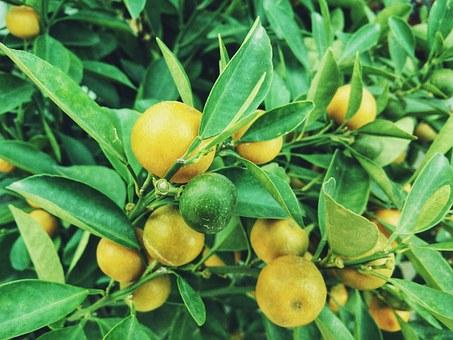 5 Manfaat Buah Lemon Untuk Kesehatan Dan Kecantikan