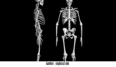 http://titisanprofesor.blogspot.com/2016/05/berapa-jumlah-tulang-di-dalam-tubuh.html