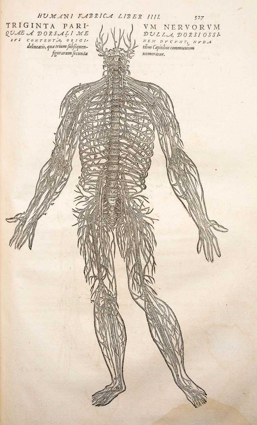 Arte y carne, una exposición de anatomía (y algo más) ~ CanalBiblos ...