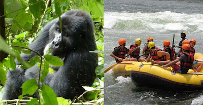 12 day, mountain gorilla, tracking, trek, 5 Day Gorilla Tracking (Trek), Lake. Bunyonyi and Lake Mburo Wildlife Uganda Gold Safari, Lake. Bunyonyi, Lake Mburo, wildlife, Uganda safari, Bwindi, mountain gorilla trekking, with Lake Bunyonyi, relaxation, exploration, Lake Mburo Wildlife, Uganda Safari in 5 days, gorilla trekking, wildlife Uganda safari, safari tour, gorilla tracking, Bwindi Impenetrable Forest, National Park, see, primates, gorilla excursion, Wildlife at Lake Mburo
