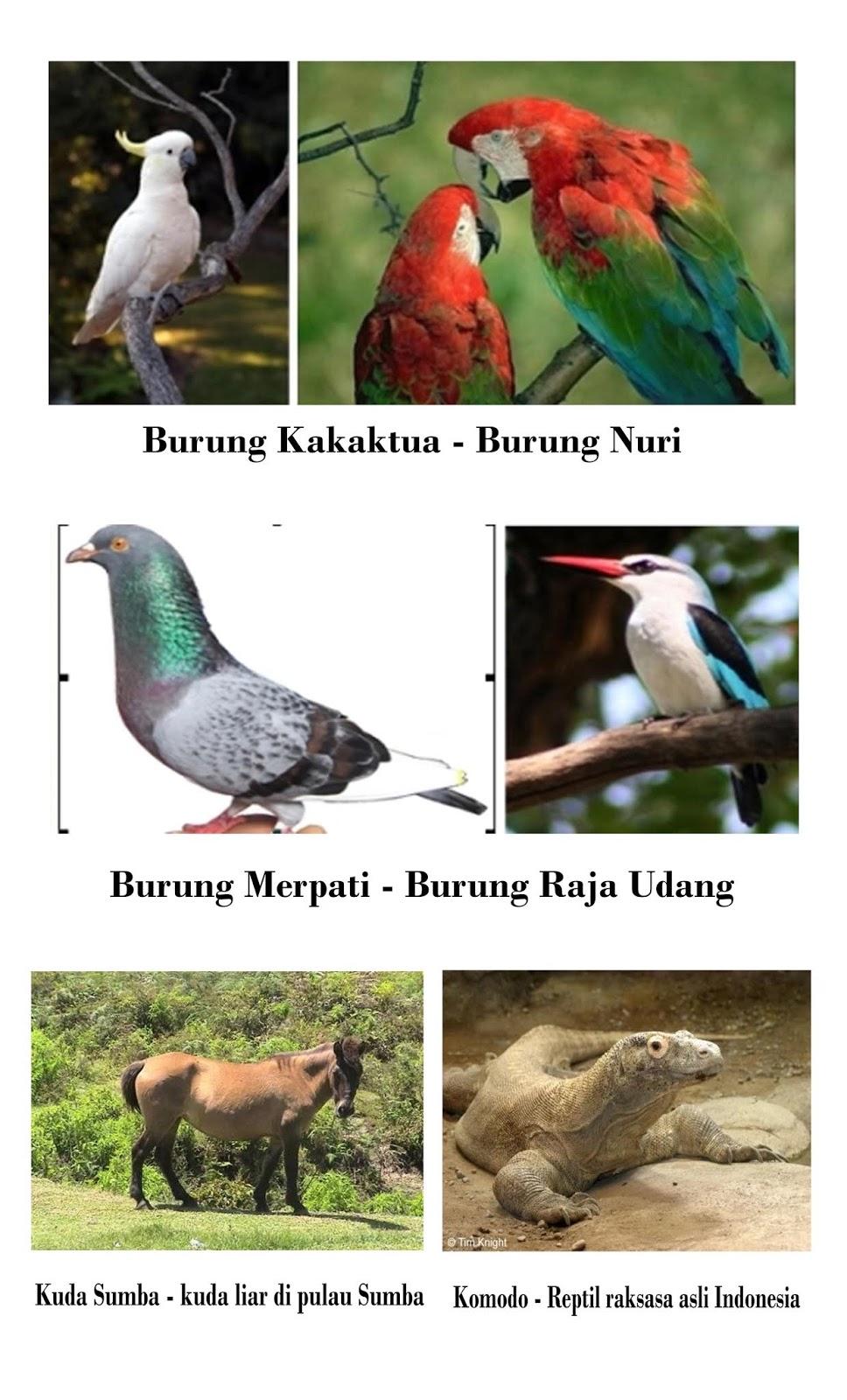 Contoh Fauna Peralihan : contoh, fauna, peralihan, Gambar, Fauna, Peralihan, Terbaik, Hewan
