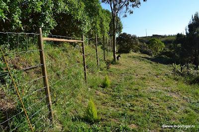 строим дом в Португалии и растим сад